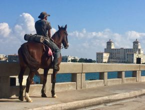 Can you use a horse as transportation?