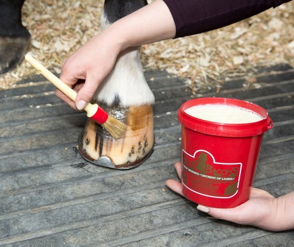 Are marshmallows made from horse hooves?