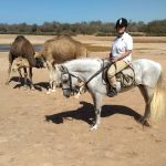 Why are horses afraid of camels?