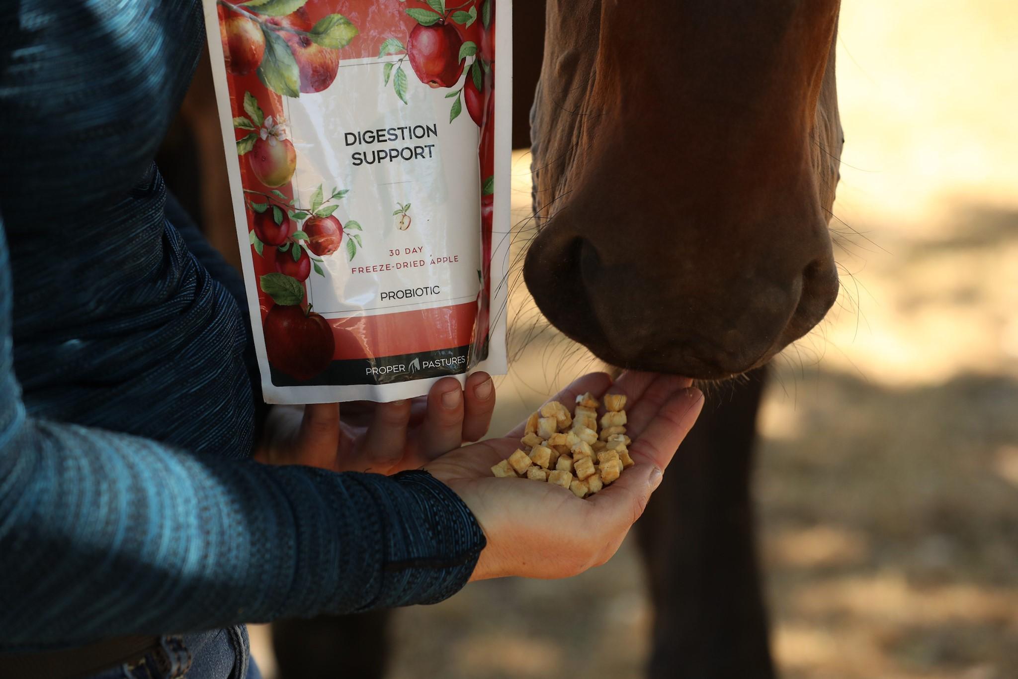 Best Probiotics for Horses