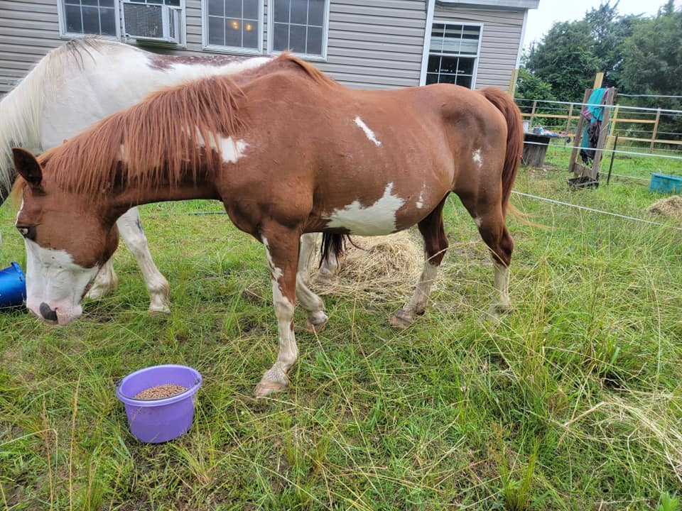 Best Weight Gain Supplements For Horses